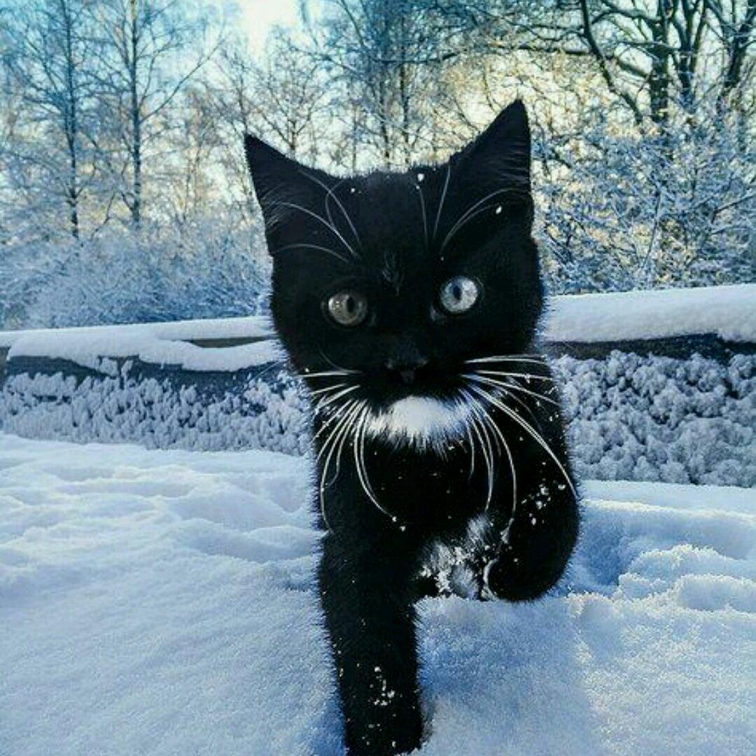 复古猫可爱图片