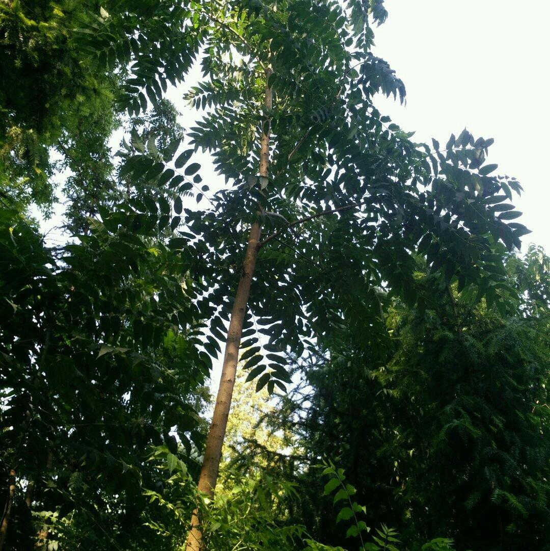 壁纸 树 1080_1081