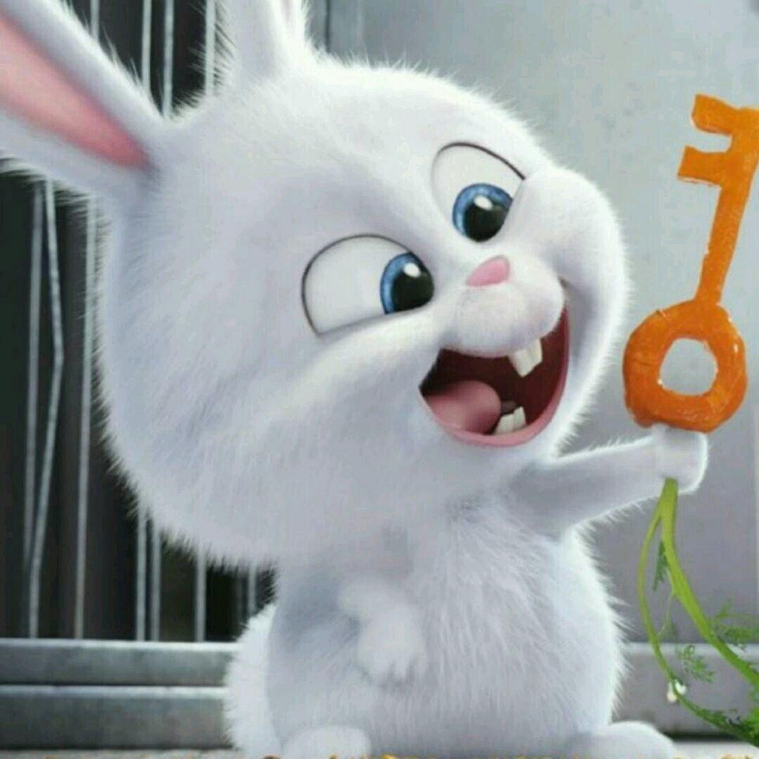 小白兔卖闲