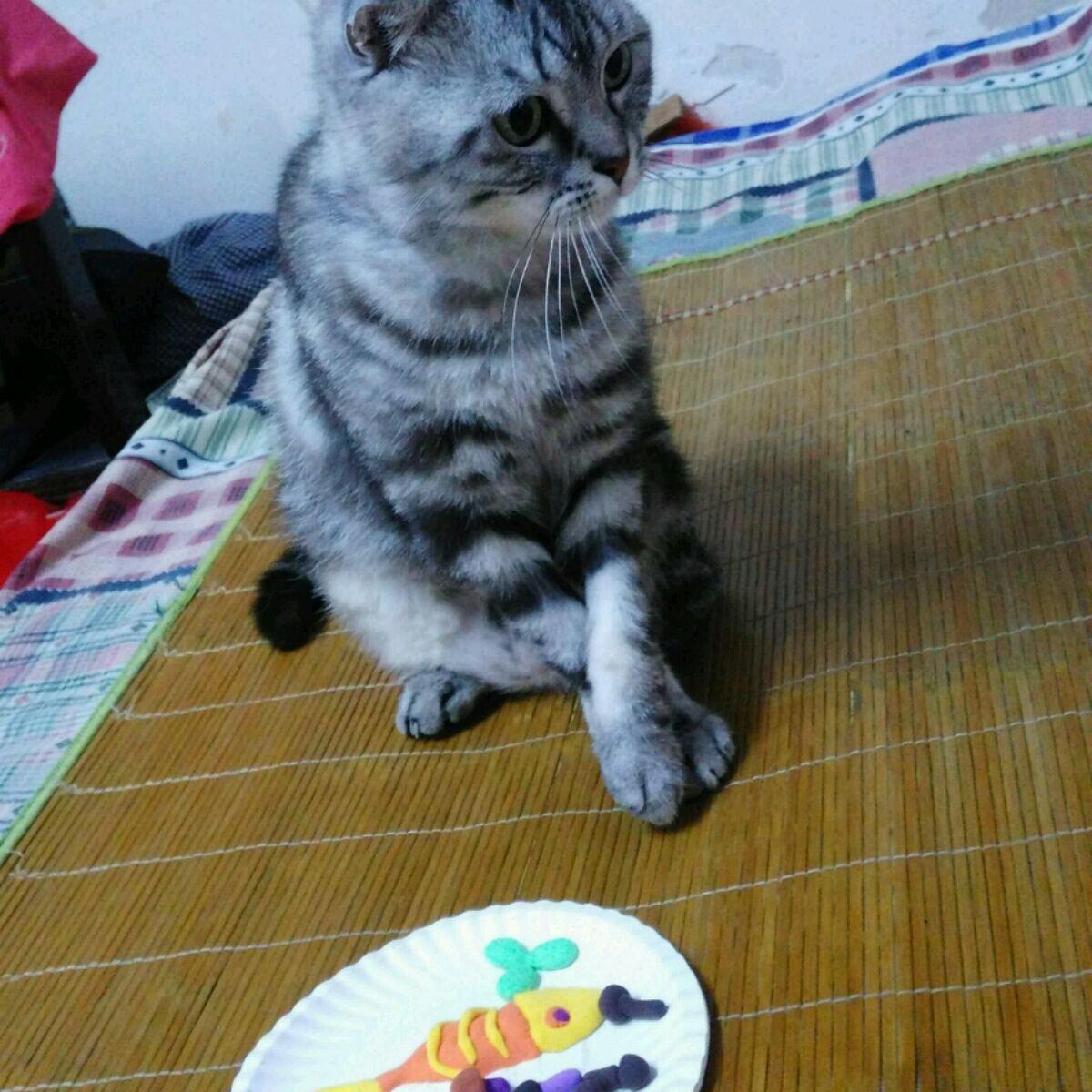 废旧光盘手工做动物猫