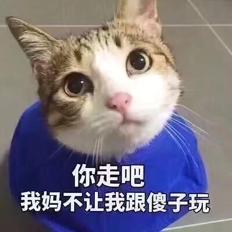苹果8视频换动物头像