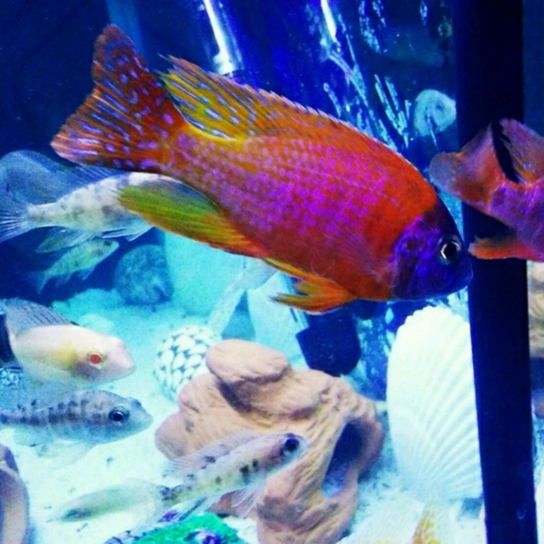壁纸 动物 海底 海底世界 海洋馆 水族馆 鱼 鱼类 1795_1795