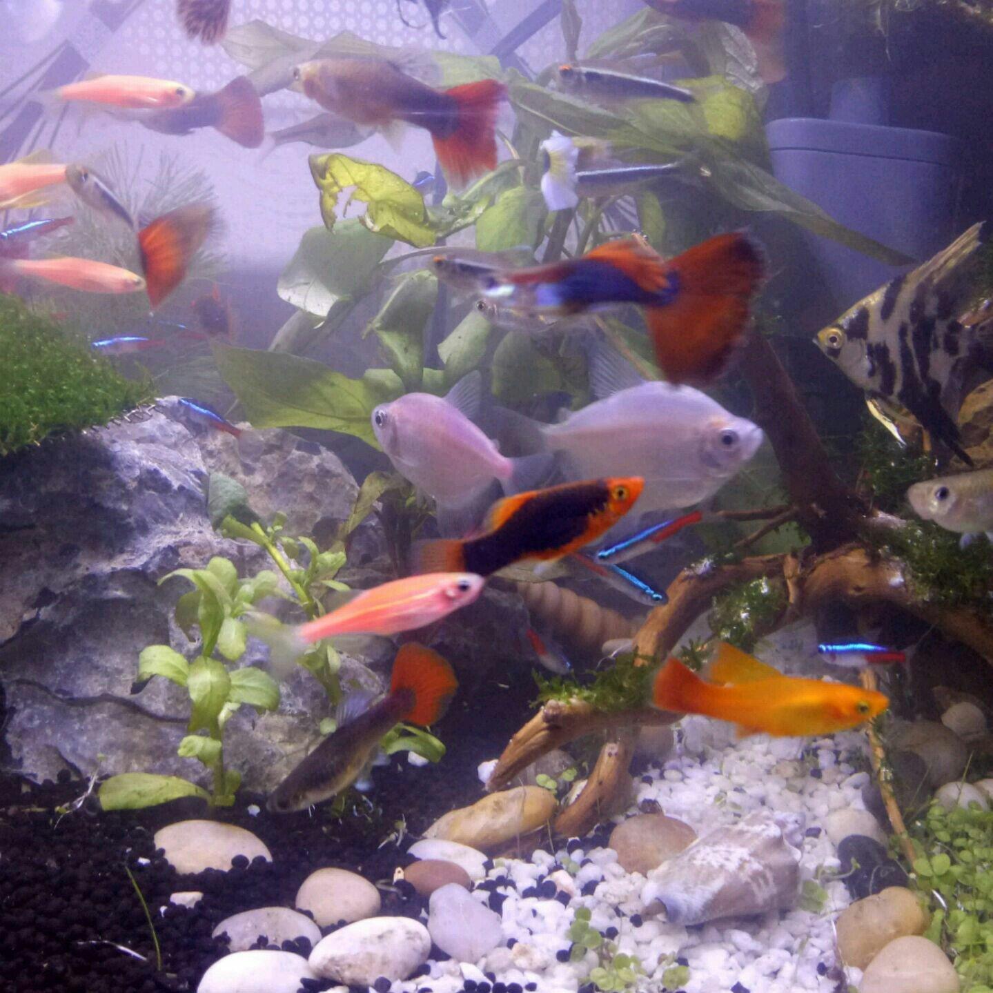 壁纸 动物 海底 海底世界 海洋馆 水族馆 鱼 鱼类 1439_1439